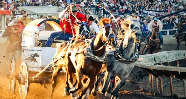 Sound The Klaxon For The Calgary Stampede Chuckwagon