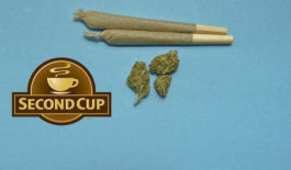 Second Cup to sell cannabis products