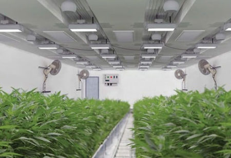 Sundial Growers expanding flagship cannabis cultivation facility in Olds