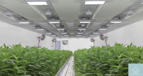 Cannabis company Sundial Growers acquires U.K. company