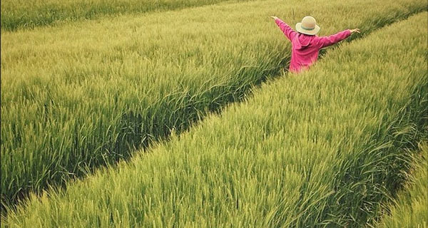 Genetic modification a crucial tool in feeding the world