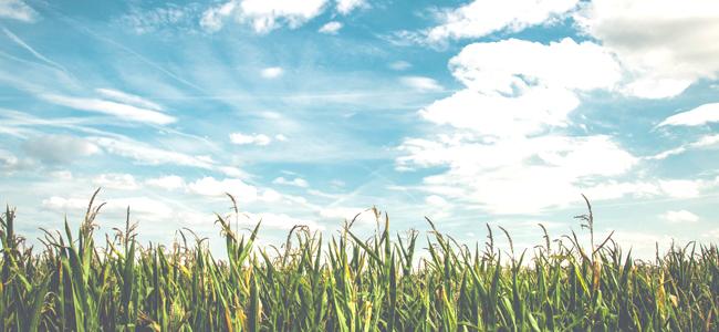 Agricultural Land: A Hidden Gem in Real Estate Investment