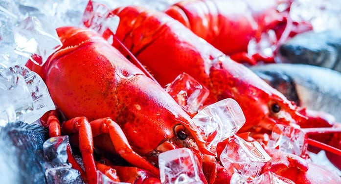 lobster fishing ice
