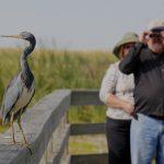 an-aloof-heron-refuses-to-watch-the-bird-watchers
